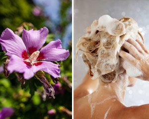 shampoing solide maison hibiscus